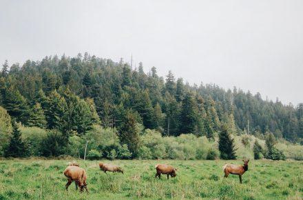 Herbstzeit ist Wildzeit – so handeln sie richtig