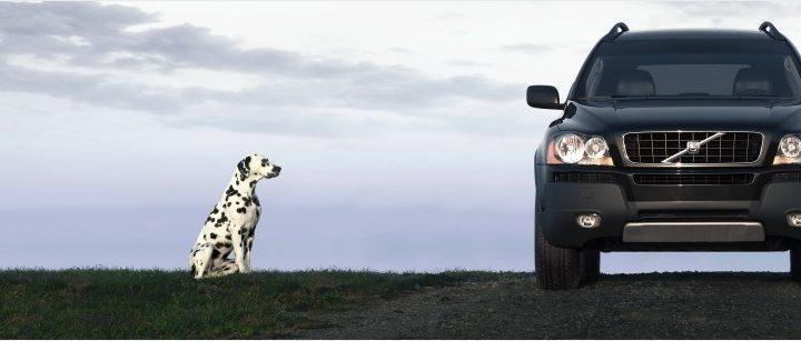 Headerbild Hund und Auto