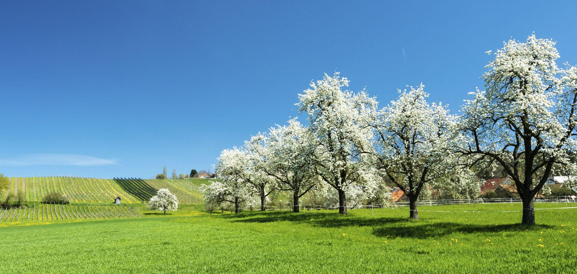 Titelbild_Thurgau_Blueten_iStock-949053822-2