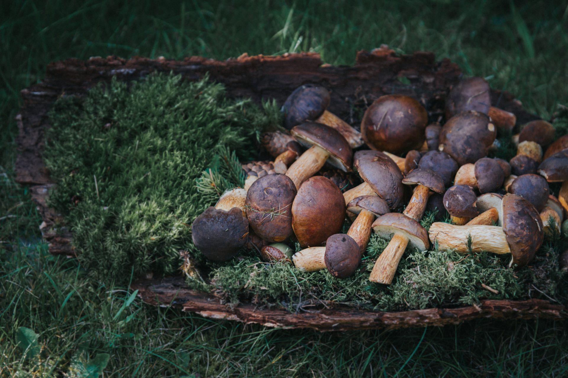 many fresh mushrooms, chestnuts