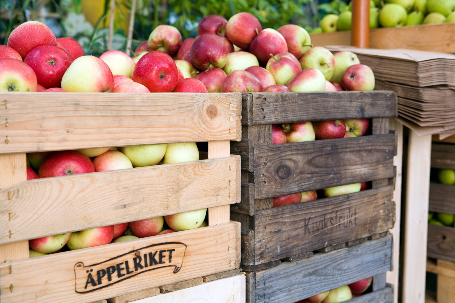 miriam_preis-fruit_and_vegetable_farm-762