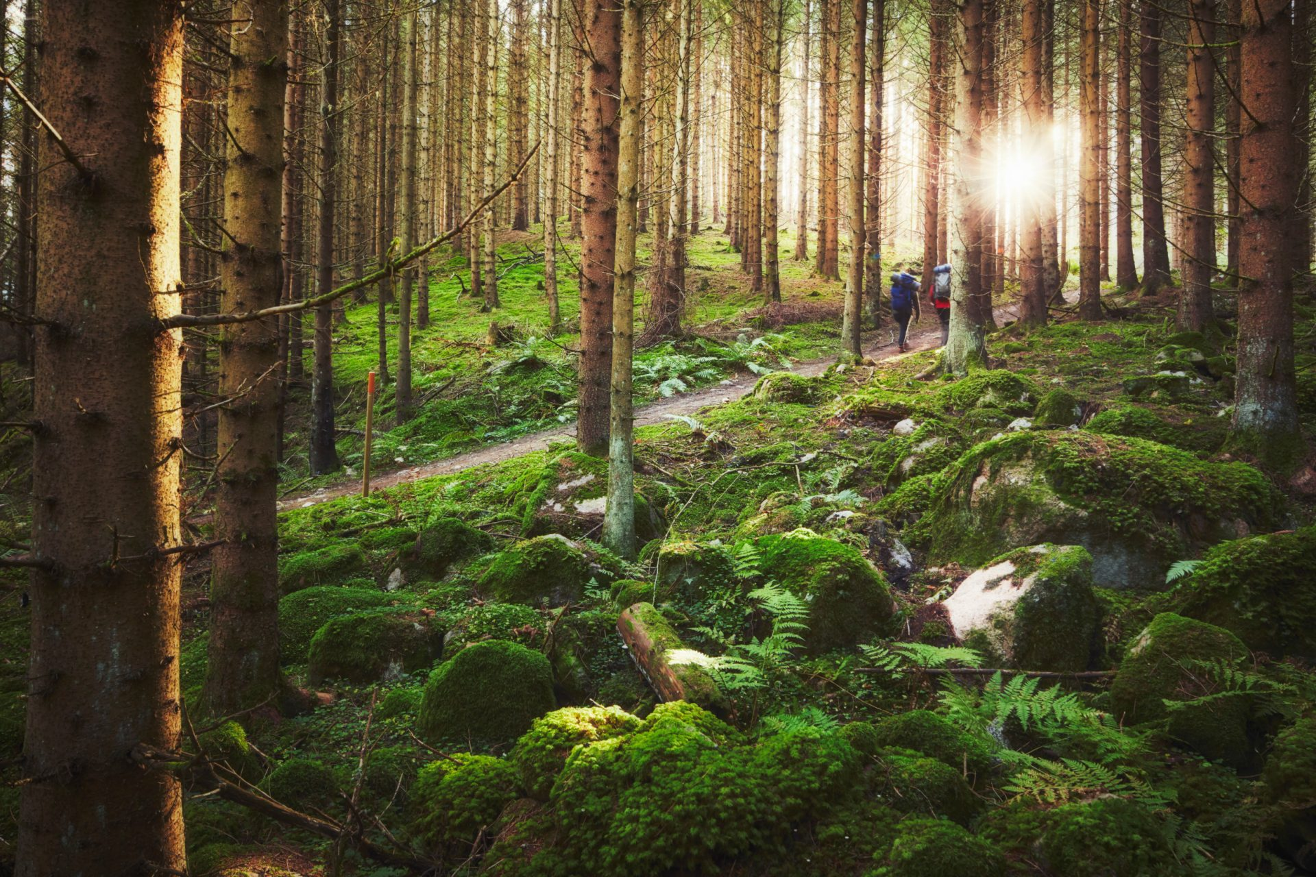 patrik_svedberg-hiking_in_the_forest-6428