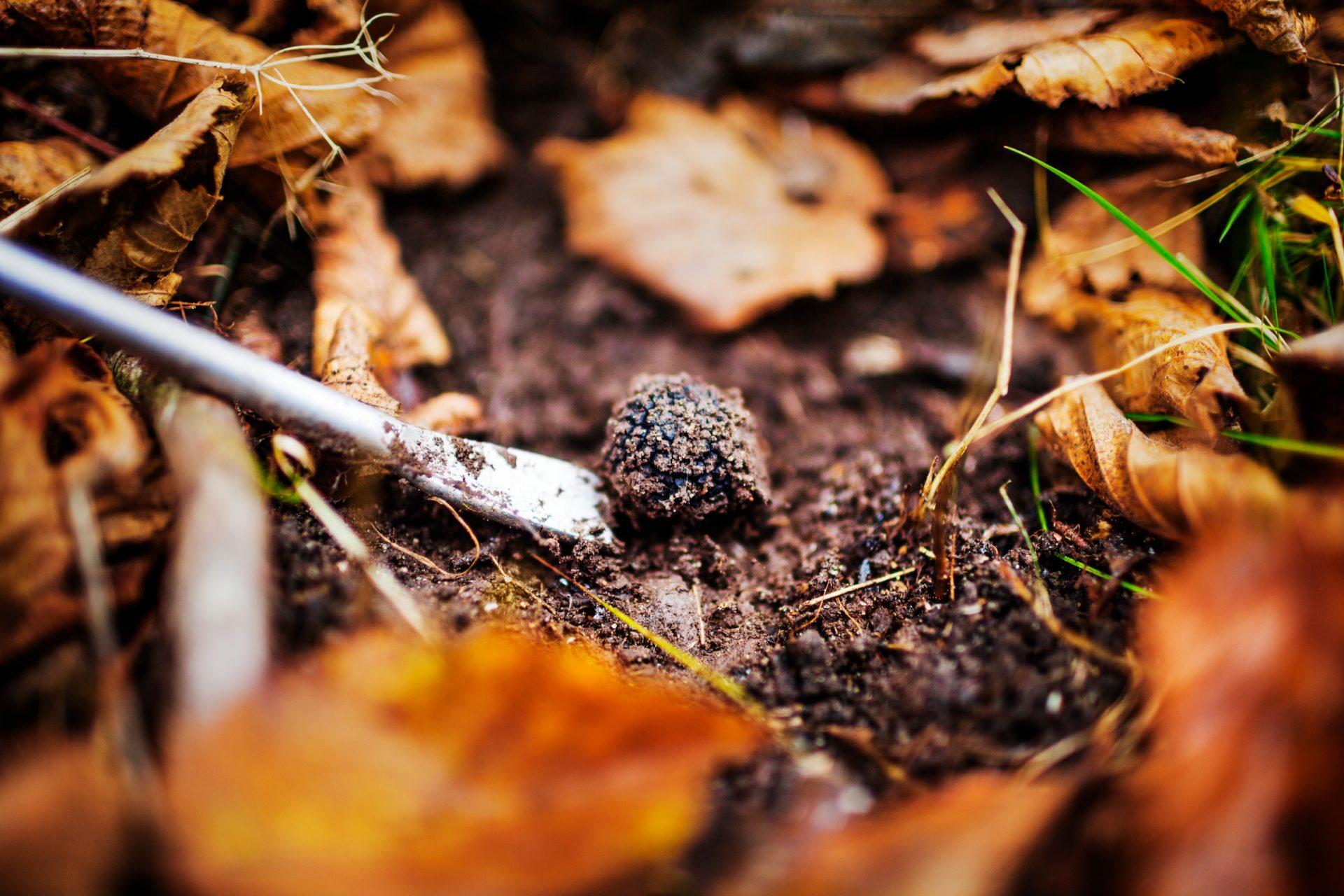 simon_paulin-truffle_hunt-3965