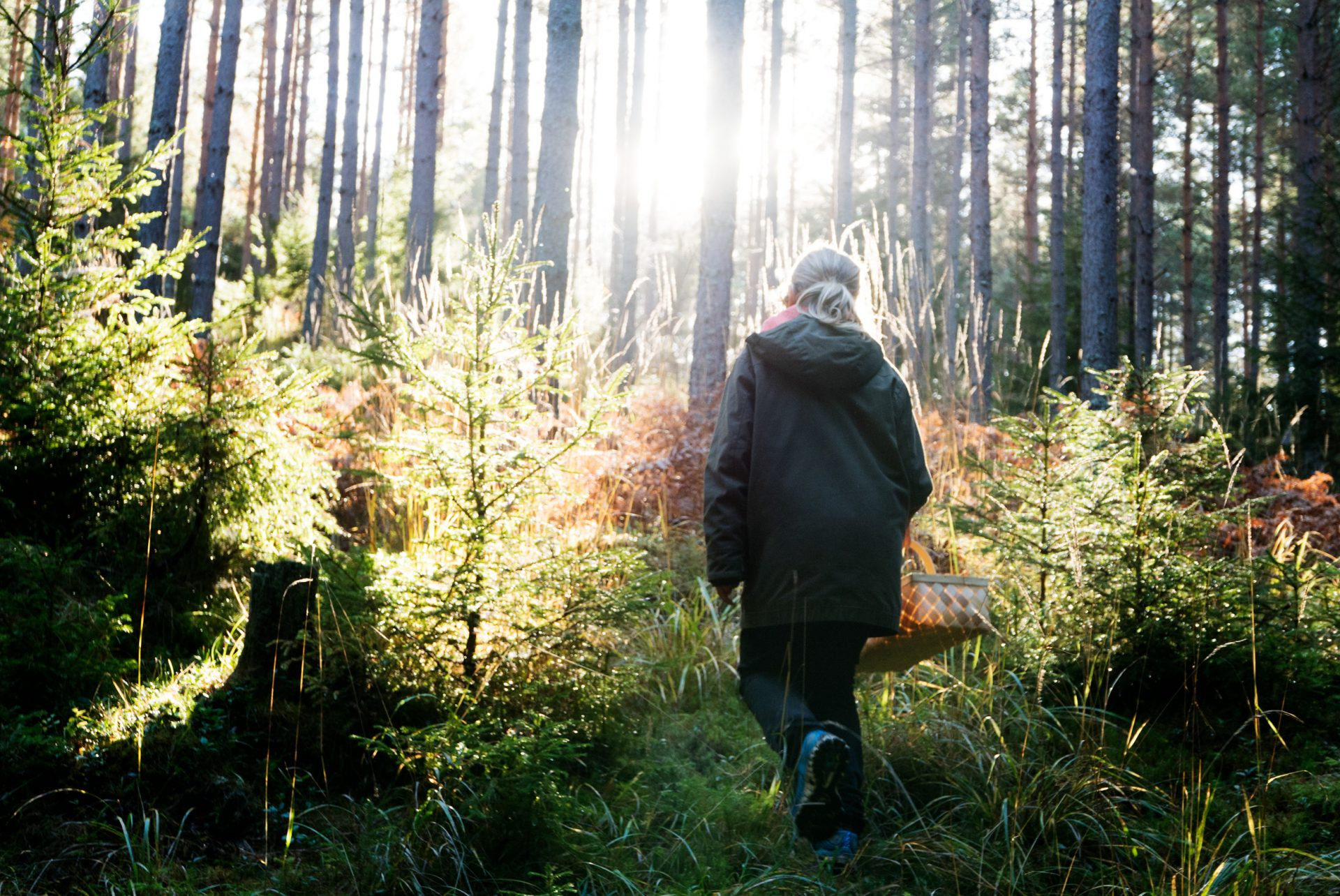 ulf_lundin-a_forest_hike-5308