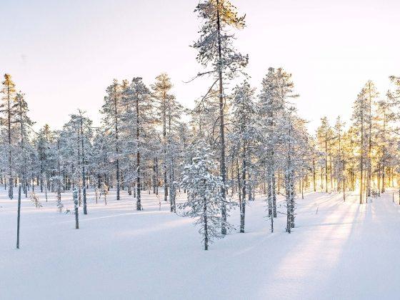 Langlauf_Schweden_besteOrte