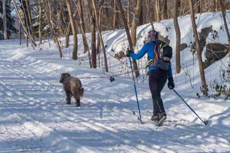 Cross country skier and her dog in the Mont Royal Park in winter.