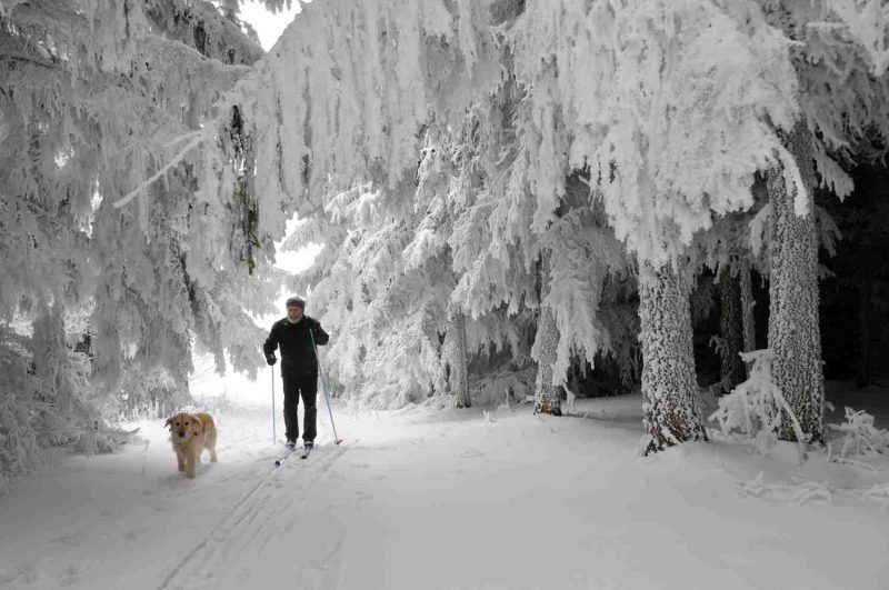 Man with dog in the ski paradise of Austria