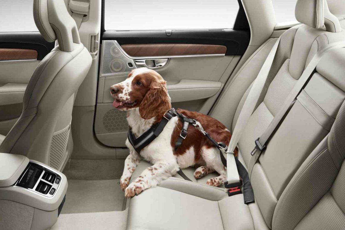 Volvo_Hunde-Sicherheitsgurt