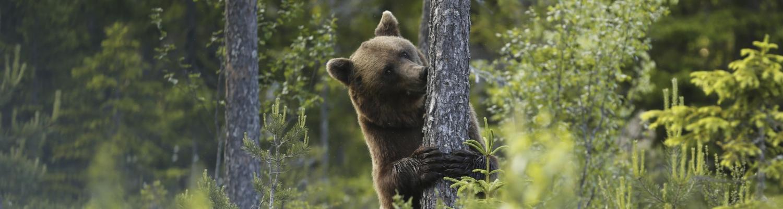 Delphine, Bären, Islandpferde: So faszinierend ist Ökotourismus in Schweden