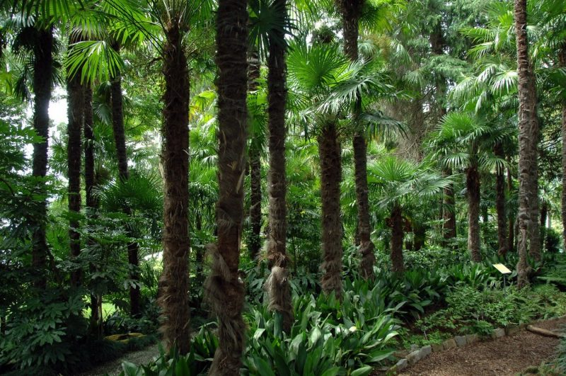 Palmenwaldbrissagoinsel