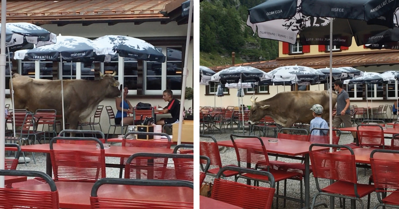 Seealpsee_Restaurant_Kuh