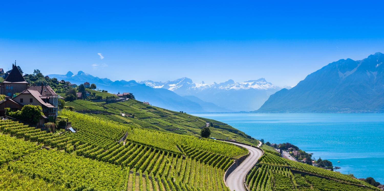 Vineyards in Lavaux region – Terrasses de Lavaux terraces, Switz