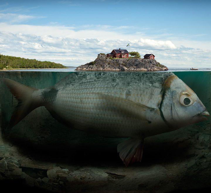 fishy-island-990×660